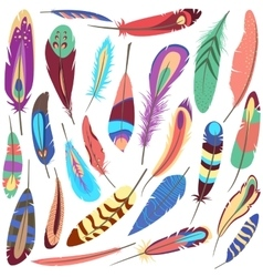 Set of bird fluffy and colorful feather vector