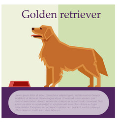 golden retriever colourful postcard vector image vector image