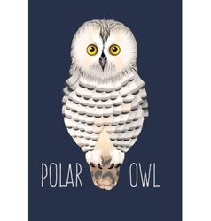 polar owl vector image vector image