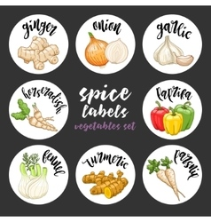 Spices herbs labels Colored vegetables set vector image