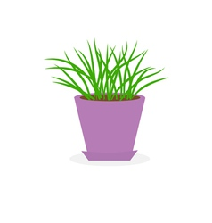 Grass growing in fviolet lower pot icon isolated vector