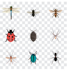 Realistic ant ladybird dor and other vector
