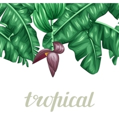 Seamless border with banana leaves Decorative vector image vector image