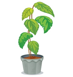 A green tall plant in a pot vector