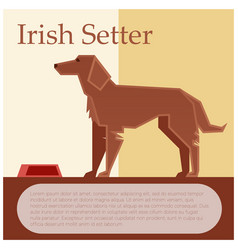 irish setter colourful postcard vector image vector image