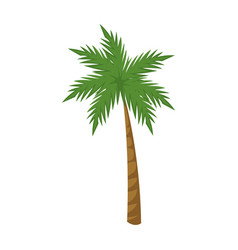 Palm tree tropical plant natural image vector