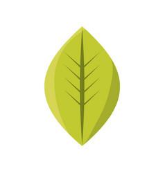 Leaf eco symbol vector