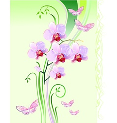 Orchids and butterflies vector