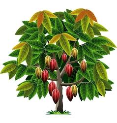 cocoa tree vector image vector image