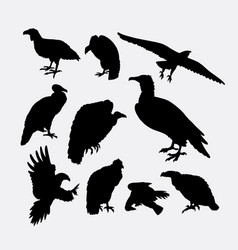 Condor vulture eagle and hawk bird silhouette vector