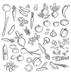 Fresh vegetables and condiments sketch icon vector image vector image