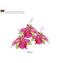 National flower of vanuatu the hibiscus flowers vector
