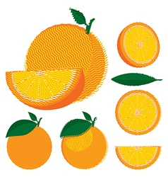 Set of whole and halved oranges with leaves vector