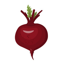 beet isolated vegetables on white background vector image