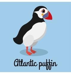 cartoon puffin color Stock bird vector image