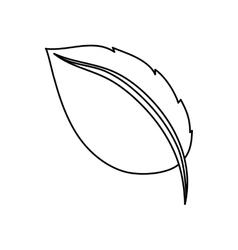 Leaf natural concept vector image