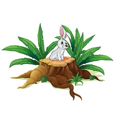A bunny above a trunk vector