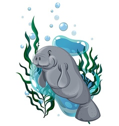 Seacow swimming in the ocean vector