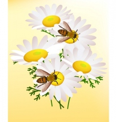 Bee on chamomile vector