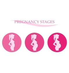 Pregnancy stages Pregnant woman vector image