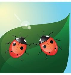 Two ladybugs vector