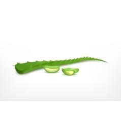 Aloe vera with slice vector