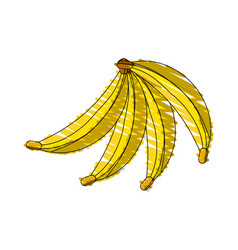 Drawing banana fruit food vector
