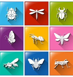 Buttons with the different type of insects vector