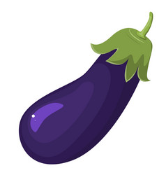eggplant isolated on white aubergine vegetarian vector image vector image