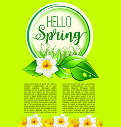 spring holiday greeting poster of dafodil flowers vector image vector image