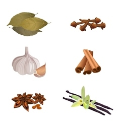 Garlic cinnamon sticks dried cloves bay leaves vector image