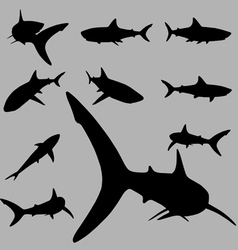 shark silhouette vector image vector image