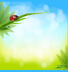 green grass and leaves on a blurred background of vector image vector image