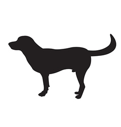 image of an dog labrador vector image