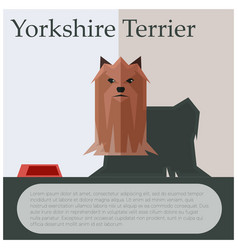 Yorkshire terrier colourful postcard vector