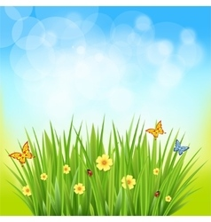 Green grass on a blurred background of nature vector