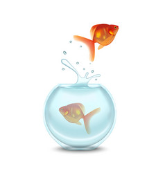gold fish and aquarium on a white background vector image