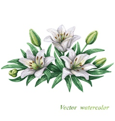 Lilies watercolor vector