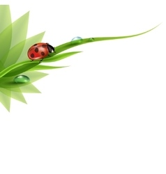 green grass with dew and ladybird vector image