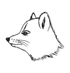 polar fox vector image vector image