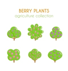 berry bush Blavkberry plant vector image