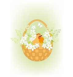 Chicken in a basket vector image