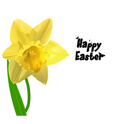 Easter yellow narcissus vector