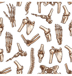 human skeleton bone seamless pattern background vector image