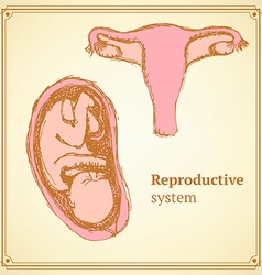 Sketch reproductive system in vintage style vector image vector image