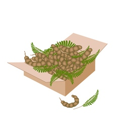 Tamarind pod and leaves in a shipping box vector