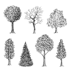 Set of ink hand drawn black and white trees vector image