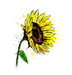 colored hand sketch sunflower sketch vector image vector image