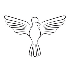 pigeon peace front view on silhouette vector image vector image