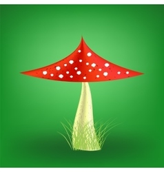 Poisonous Mushroom Fly Agaric vector image